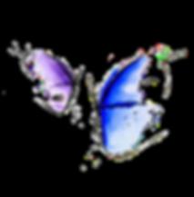 Logo farfalla studio Mio.Riab Sondrio