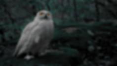 Owl Tumbnail_gereinigt1.27_edited.jpg