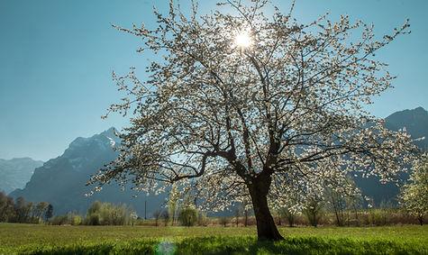 Baum_skalliert_für_HP.jpg