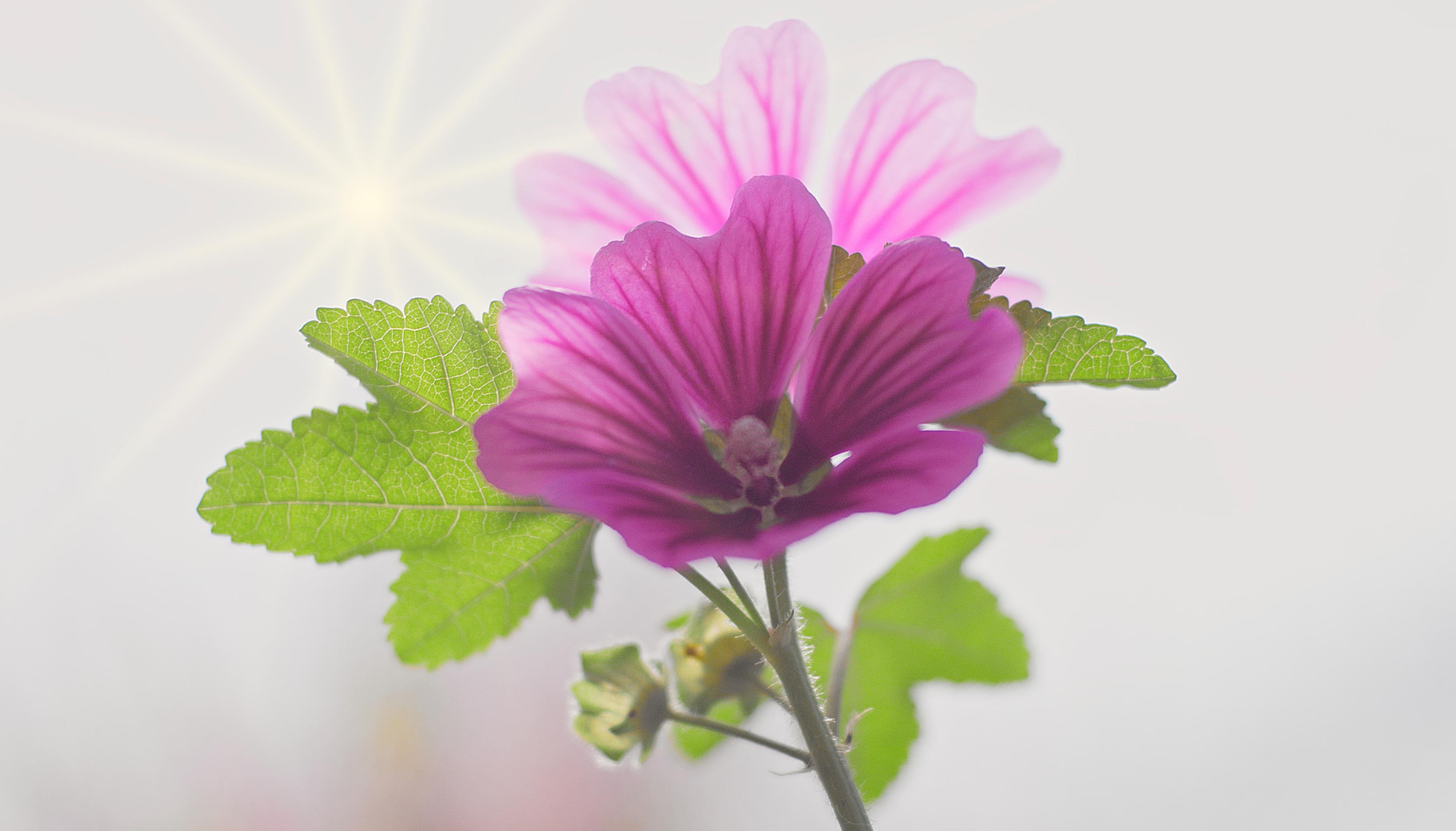 Flower_1.22.4 ohne