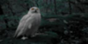 Owl Tumbnail_gereinigt1.27.1.jpg