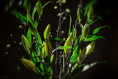 Nanlte Flowers Radial WZ mit.jpg