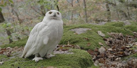 Owl ohne Grading_1.24.1.jpg