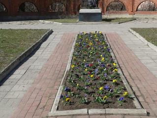 Посадка цветов в клумбах города