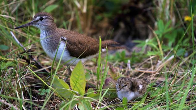 Тайны птичьих гнезд