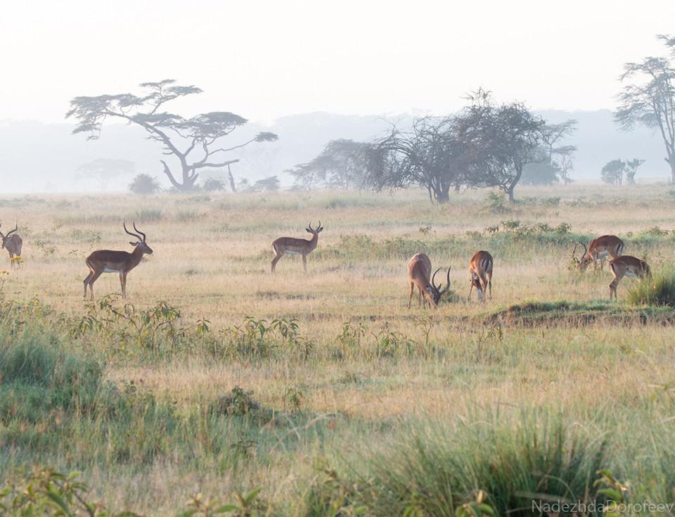 Национальный парк. Кения