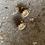Thumbnail: Boucles d'oreilles «Venus»