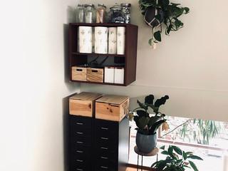 Einblick Studio Regal Pflanzen Rollcontainer