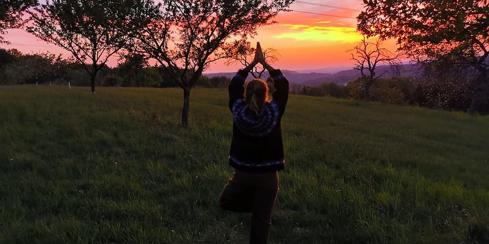 Abend Yoga (Anfänger:innen willkommen)
