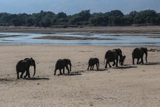 Elephant Chain Gang, Luangwa National Park
