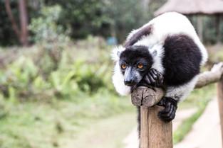 , Andasibe, Madagascar