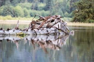 Reflection on the water at Bella Bella, British Columbia, Canada