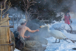 Feeding the swan while enjoying the Onsen, Hokkaido, Japan.jpg