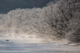 Kushiro Marshes, Home of the Red Crowned Cranes, Hokkaido