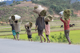 Villages along the road with rice fields in the background, Madagascar