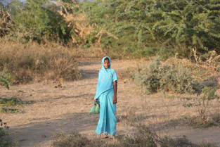 Lady in Turquoise in the Ranthambore National Park, India