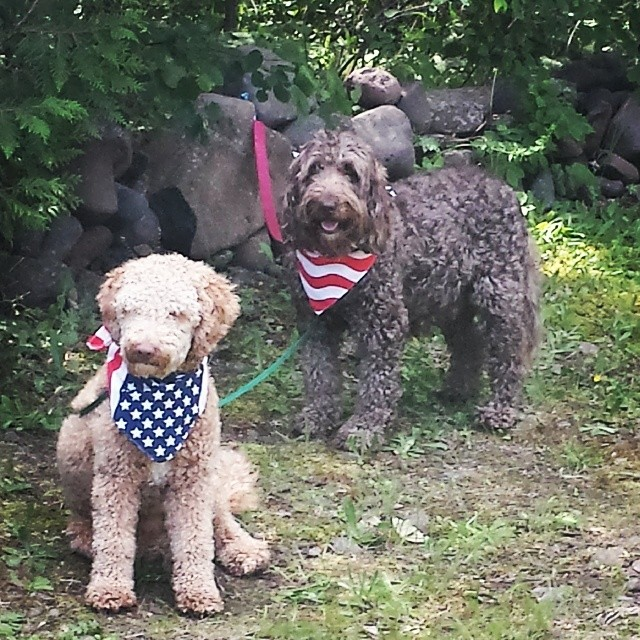 My perfect pair. Had a great vacation in the UP of MI