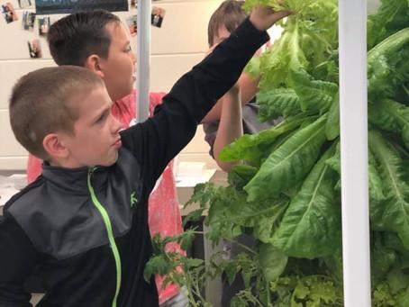 Tower Gardens in Schools!