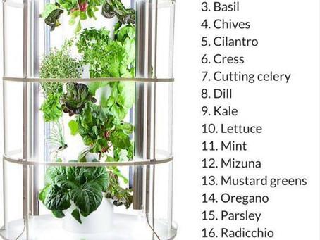 Growing Fruits & Veggies Indoors!
