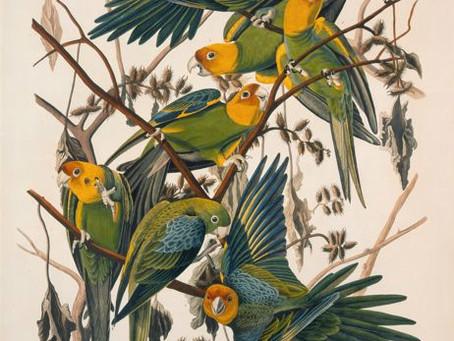 Audubon Coloring Page