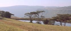 Dam and Acacias
