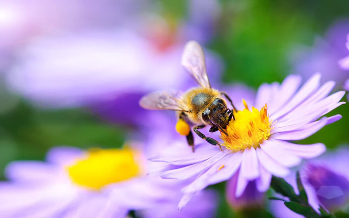 bee and flower.jpeg