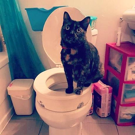 Image description: cute tortie cat sitti