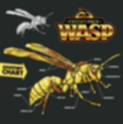 wasp-back-illustration.jpg