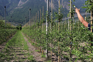 gesunde bäume nach 3 monaten pflanzung 04.jpg