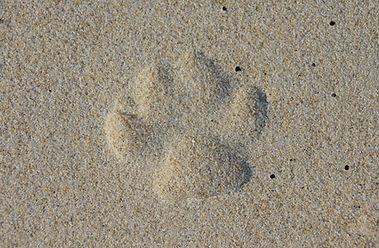 Noosa vet Coolum veterinary  sunshine coast emergency animal