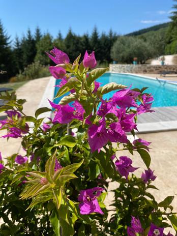 piscine bougainvillié.jpg