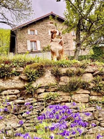 Vue jardin maison Bernard et Tika mode t