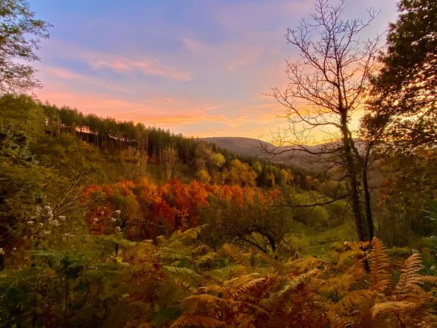 Vue couleur automne sur chenes américain