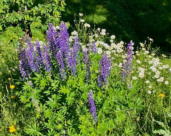 Fleurs violettes.jpg