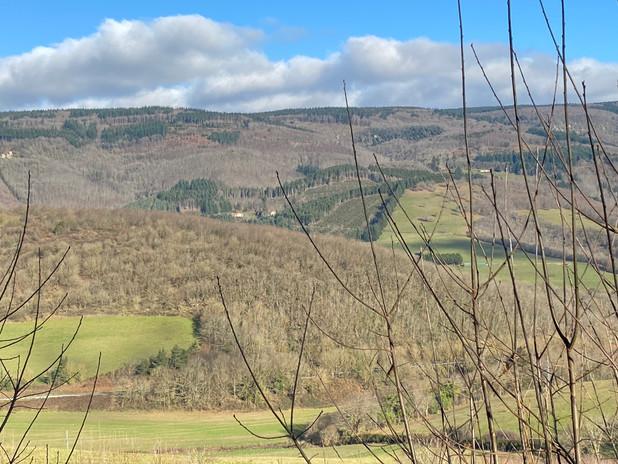 Vue maison et arbre vue de la colline de