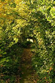 Leaf_Tunnel.jpg