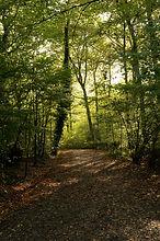 Country_Path.jpg