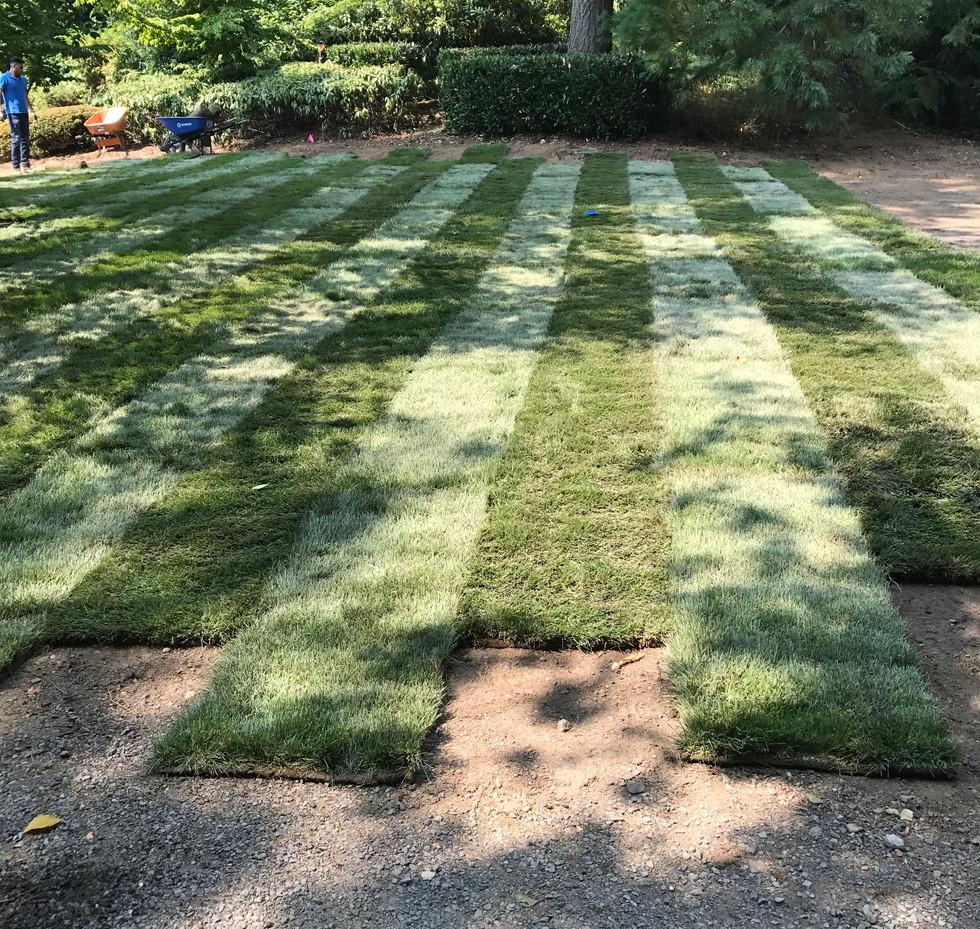 lawn installation 2