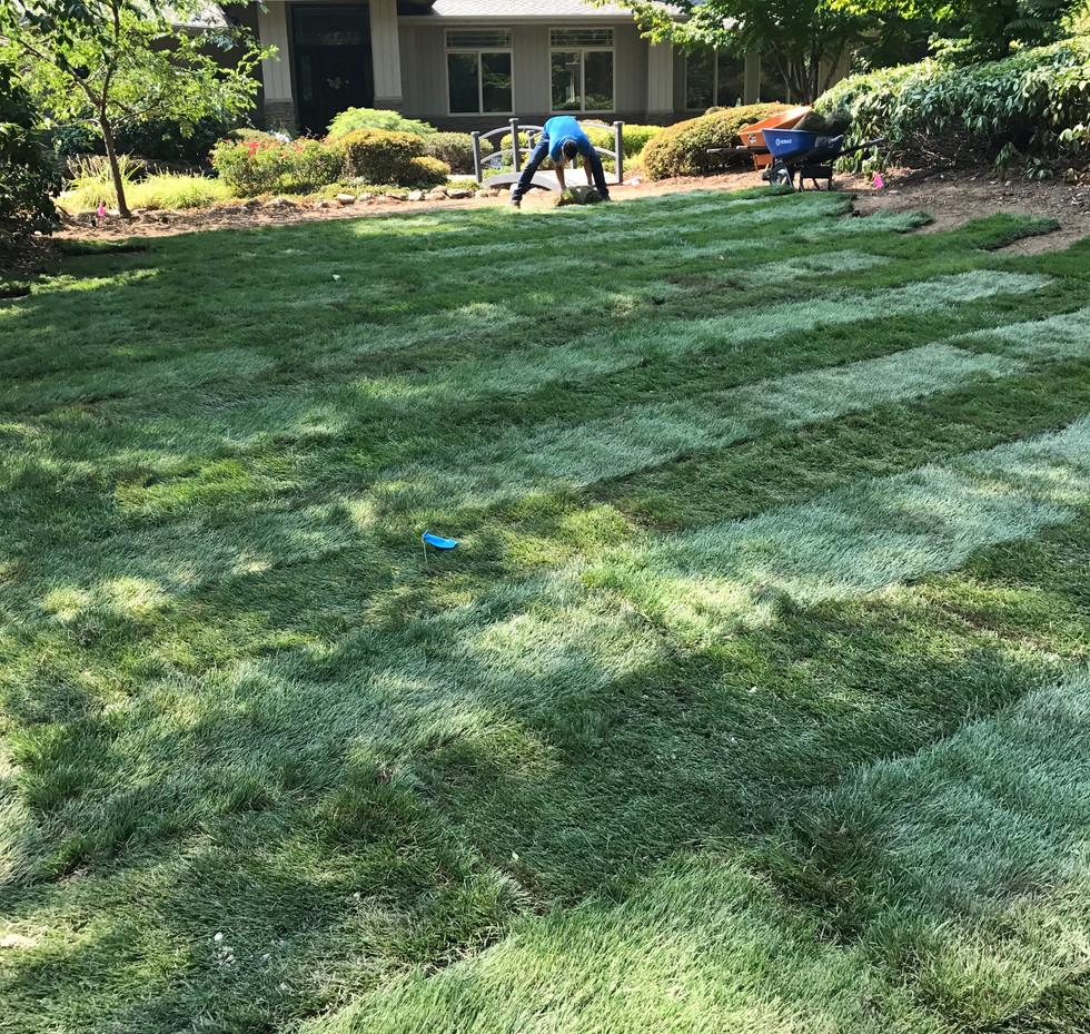 lawn installation 3