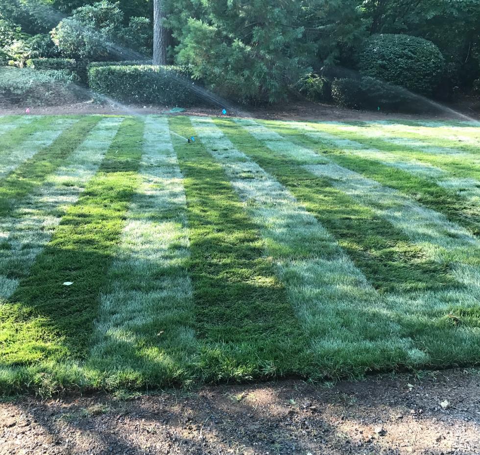 lawn installation 4
