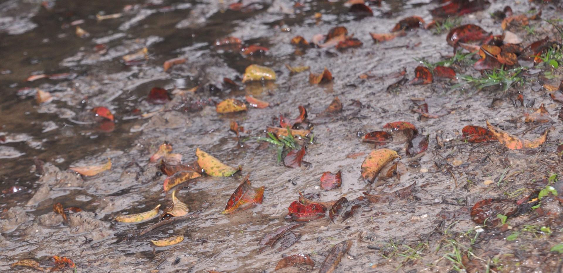 margaret leaves in mud Wabi Sabi jpg..JP