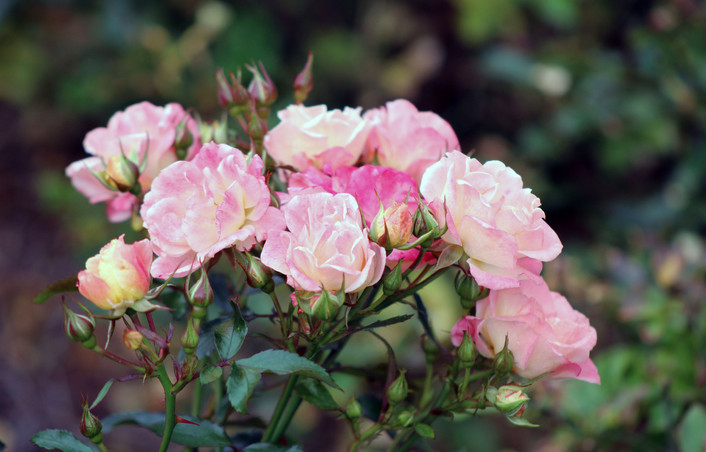 Mary - pinkish white flowers. jpg.JPG