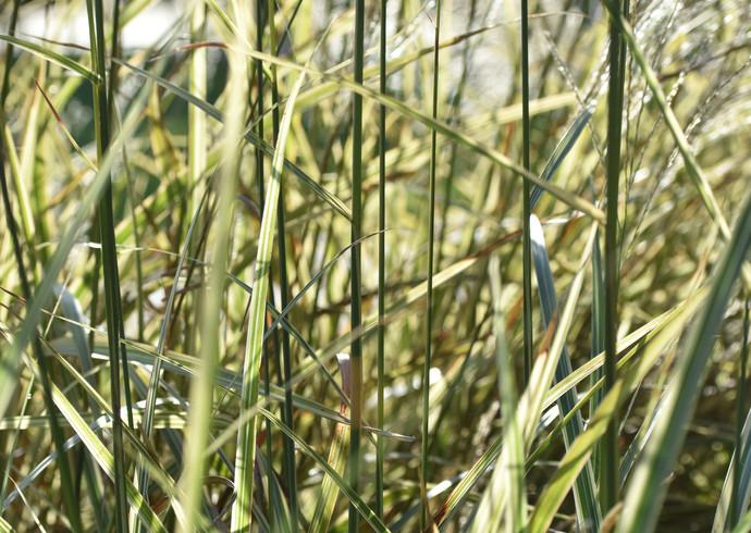 grass- Tori.JPG