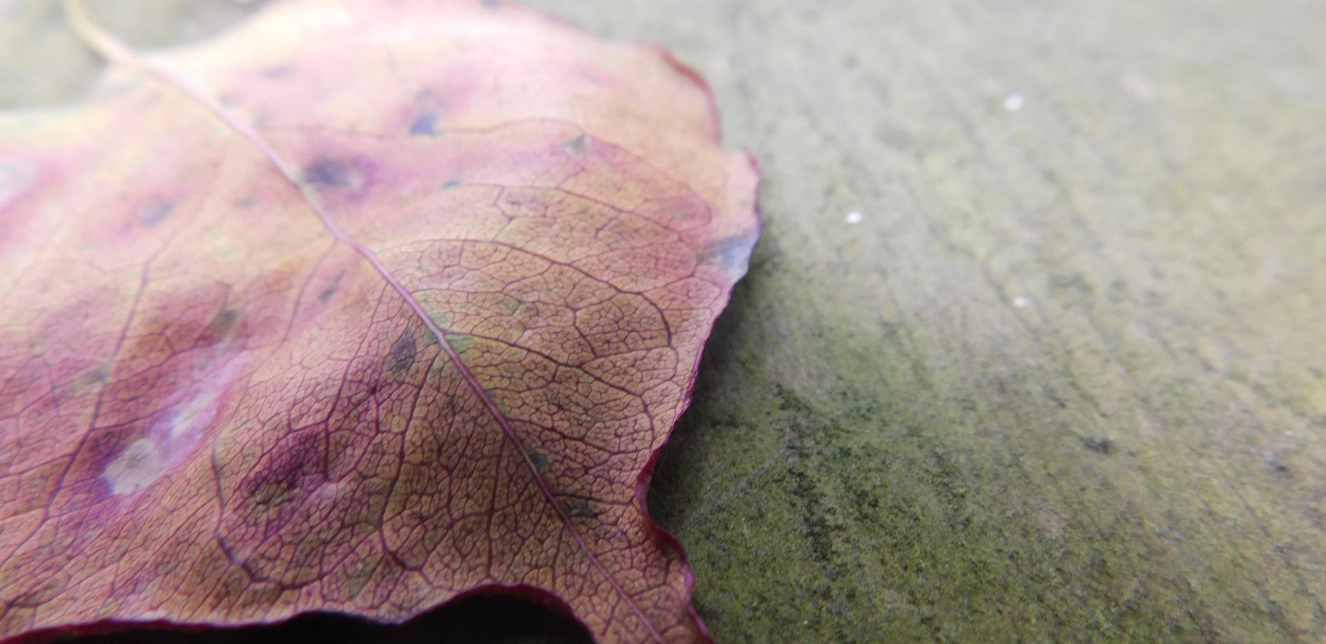 leaf texture.JPG