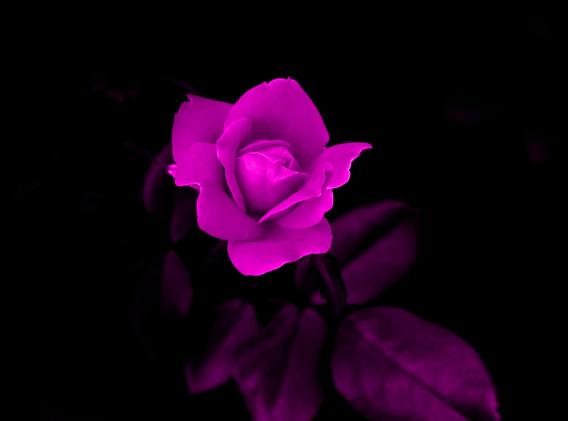 Mary Ann pink flower1062 - Copy - Copy -