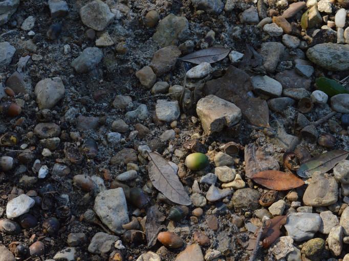 margaret rocks and acorns wabi sabi. jpg