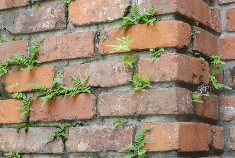 Eva Brick Plants Wabi Sabi.JPG