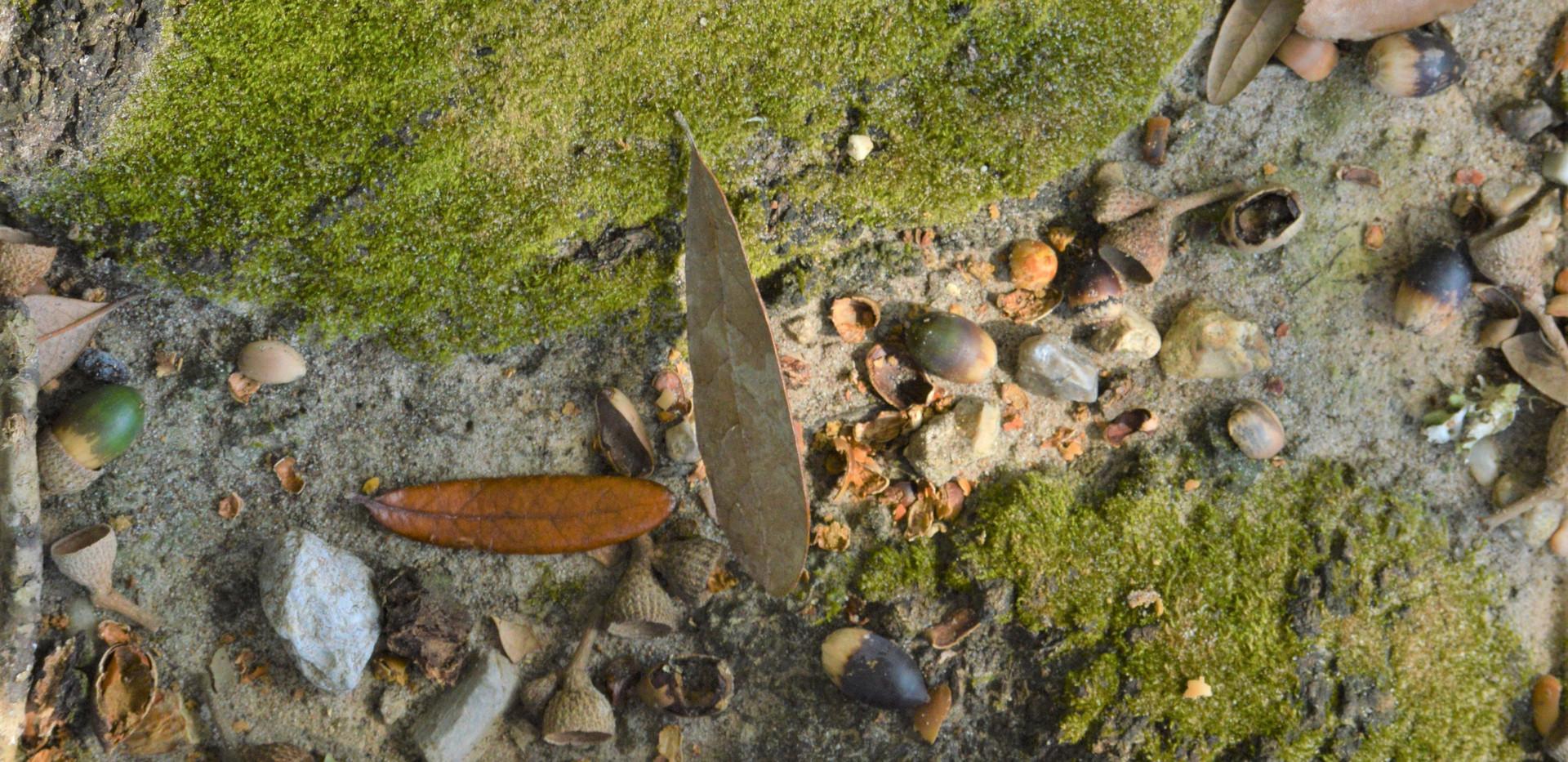 margaret shoes on moss. jpg.JPG