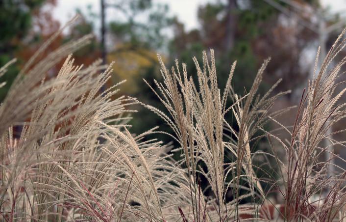 Mary - weeds. jpg.JPG