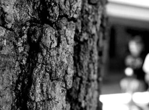 Mary Ann wood bark1108.JPG